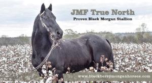 JMF True North in cotton field